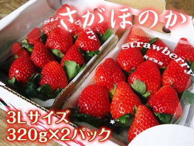 熊本イチゴ『さがほのか』 ビニールを曇らせて日焼けを防ぎ、高品質のイチゴを育てます_a0254656_1883575.jpg