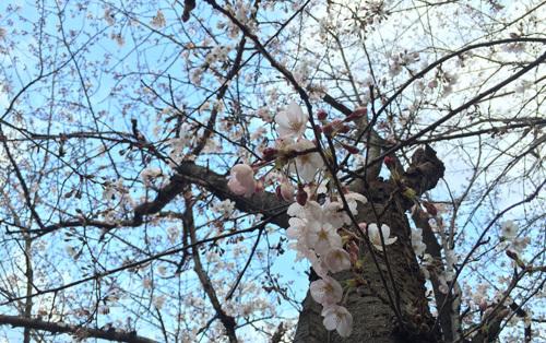 徒歩通勤の楽しみ~季節を感じられます!!_d0082356_08395456.jpg