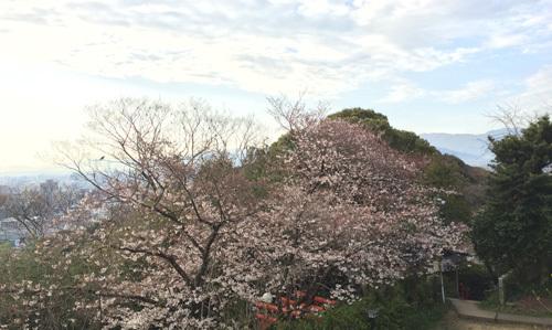 徒歩通勤の楽しみ~季節を感じられます!!_d0082356_08502268.jpg