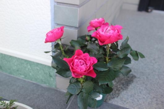 f0338156_00083574.jpg