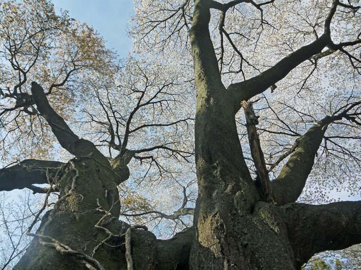 六国見山森林公園の夫婦桜の夫桜が満開!(3・28)_c0014967_1852432.jpg