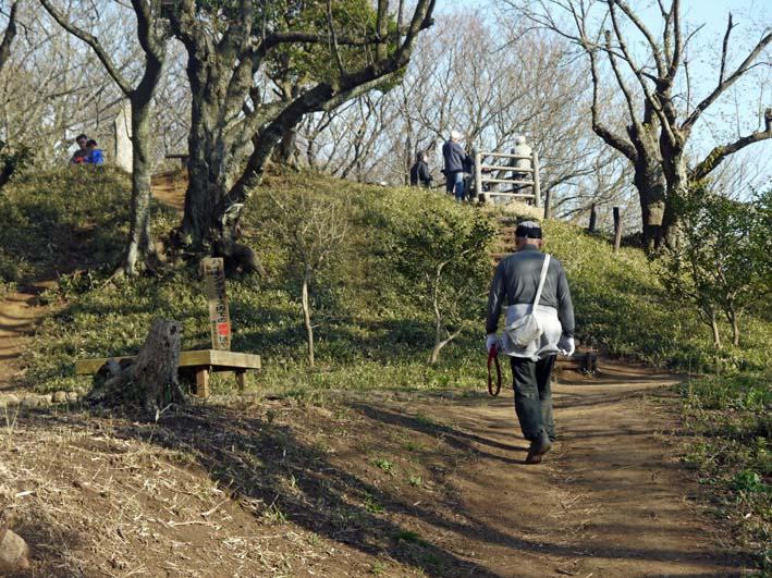六国見山森林公園の夫婦桜の夫桜が満開!(3・28)_c0014967_18573425.jpg