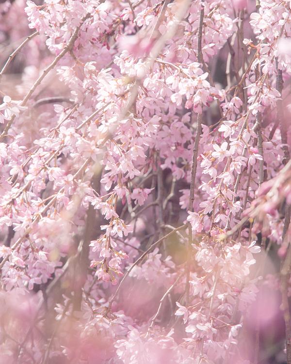 春の正客。_b0022268_2011186.jpg