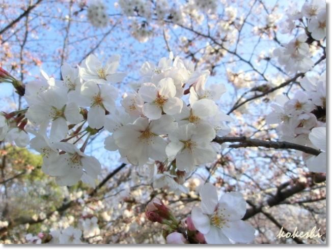 f0179469_23575169.jpg
