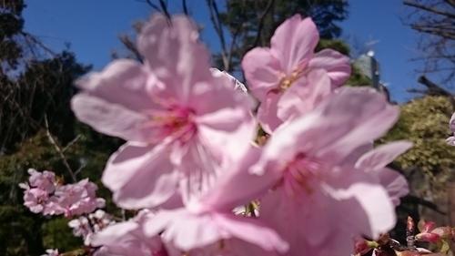 「春」_a0075684_0471827.jpg
