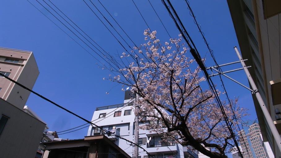 桜が咲き始めました_b0061387_1330945.jpg