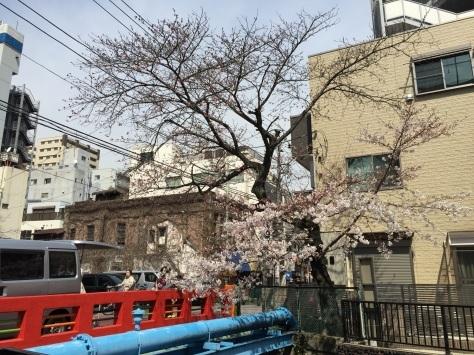 内川桜 _a0112393_11311176.jpg