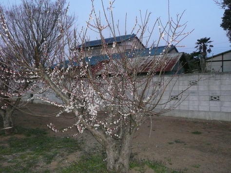 2015年4月6日 乙戸沼公園さくら その9_d0249595_18294259.jpg