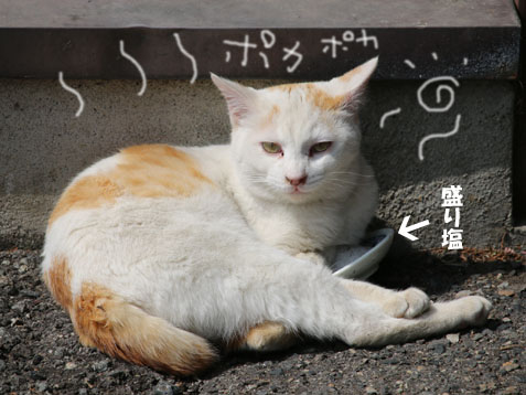 今日は暖かいですね~ヽ(^o^)丿_c0140599_11494922.jpg