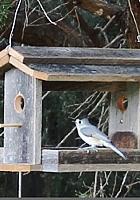 読書大好きニューヨーカー続報 Bird Feeders for Readers_b0007805_18225849.jpg