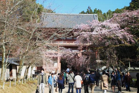 醍醐寺霊宝館 2015桜だより 8_e0048413_18201152.jpg