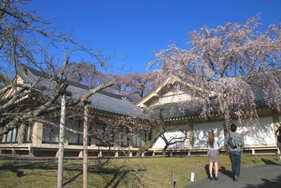 醍醐寺霊宝館 2015桜だより 8_e0048413_18202687.jpg