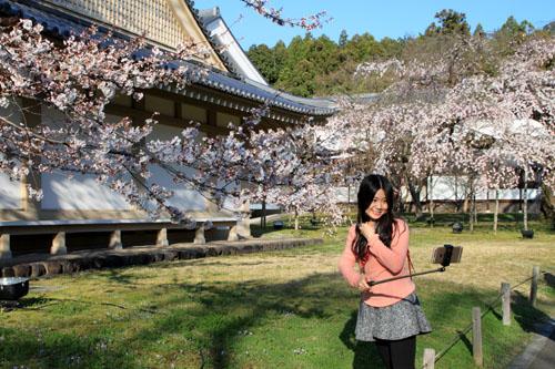 醍醐寺霊宝館 2015桜だより 8_e0048413_18225569.jpg
