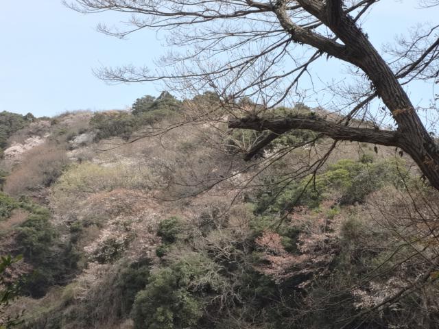 鎌倉(初日)_f0148927_17484075.jpg