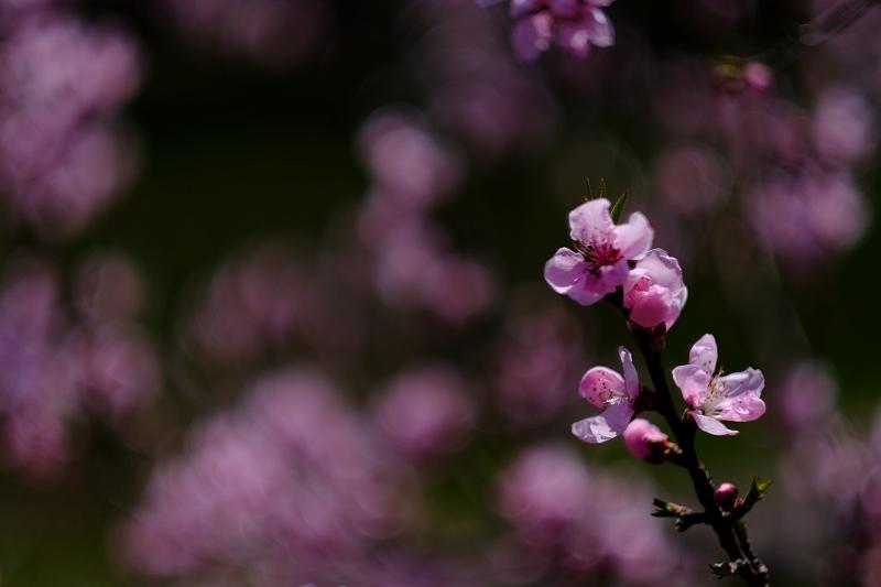 春を抱きしめて_f0050534_00042514.jpg