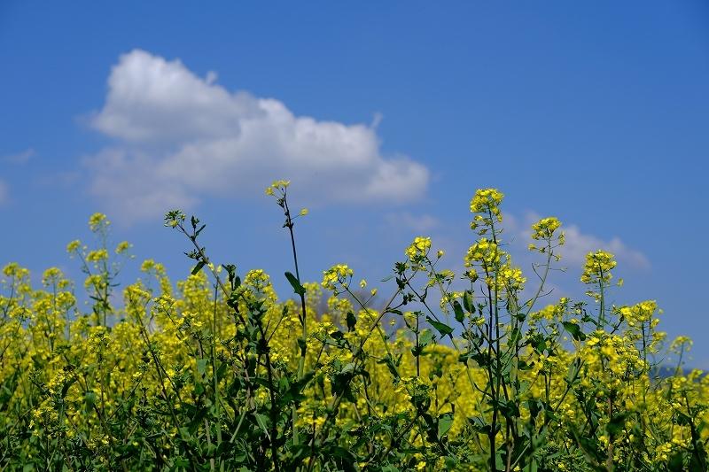 春を抱きしめて_f0050534_00042616.jpg