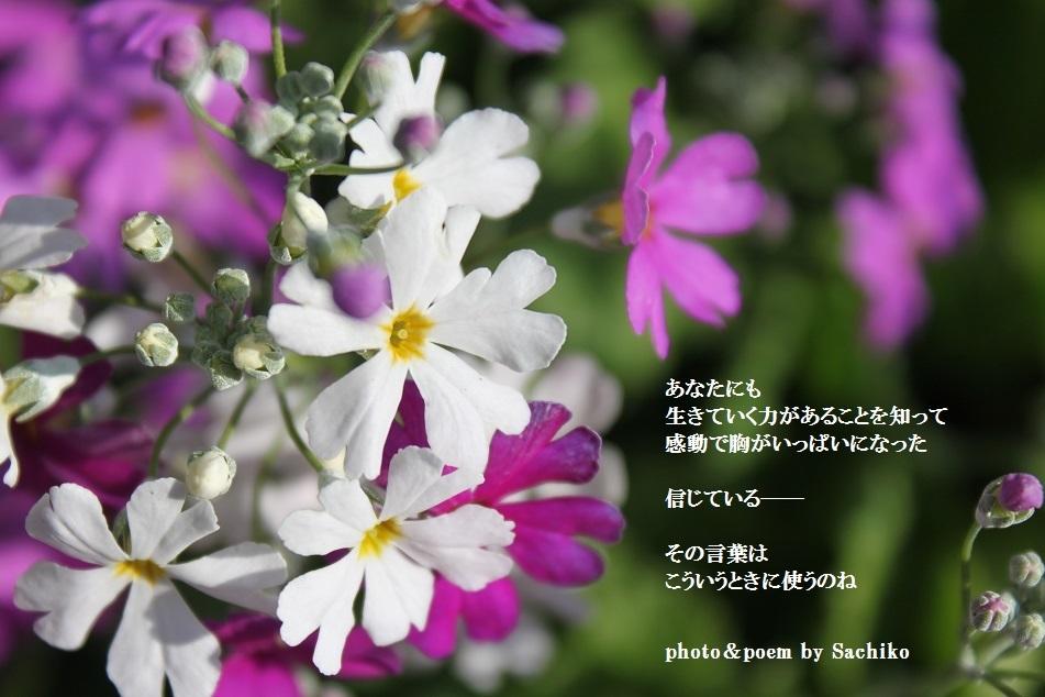 f0351844_10383629.jpg