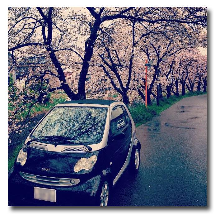 夜桜☆ナイトラン 2015_b0078651_22195417.jpg