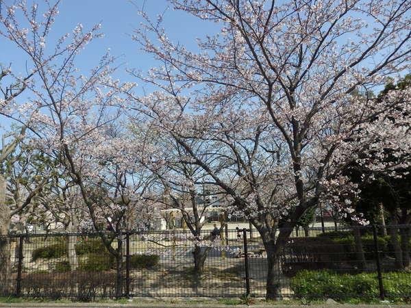 福岡市内の自宅近くの桜_f0337554_1882893.jpg