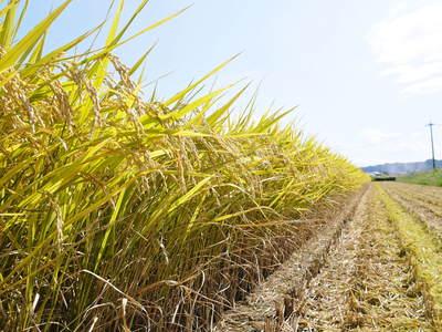 七城米 長尾農園 「天地返し」で深くまで強い根をはる田んぼ作り!_a0254656_18432264.jpg