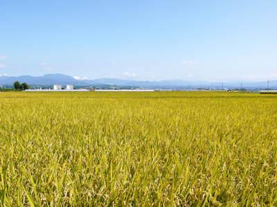 七城米 長尾農園 「天地返し」で深くまで強い根をはる田んぼ作り!_a0254656_18555314.jpg