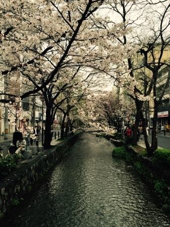 今日の桜@高瀬川_b0341759_16505869.jpg