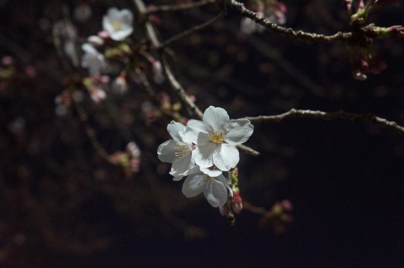 3年ぶり(たぶん)のお花見!in福岡_e0206865_221771.jpg