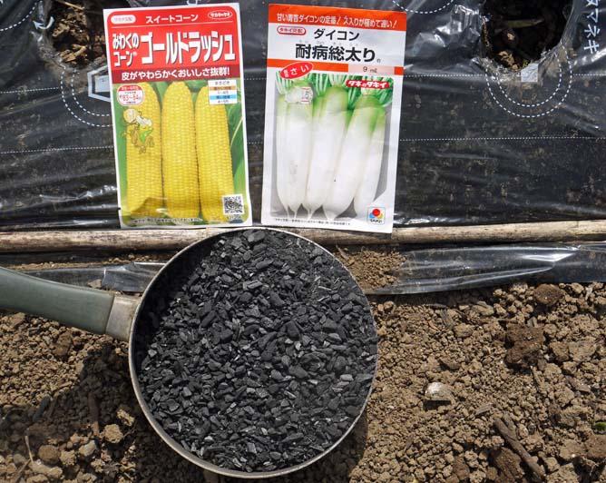 トウモロコシ、アオクビダイコンの種まき3・27_c0014967_89512.jpg