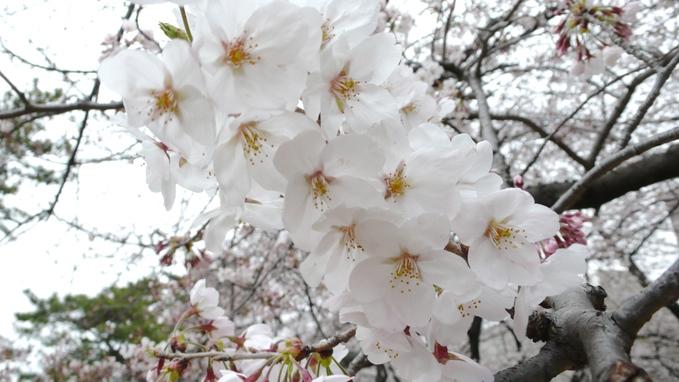 お花見。_f0143269_17553999.jpg