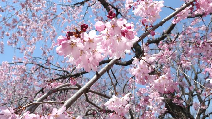 お花見。_f0143269_1755513.jpg