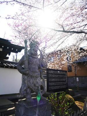 しだれ桜_a0027275_22121495.jpg