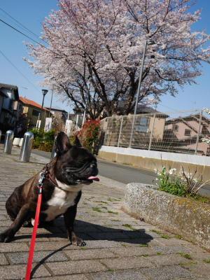 しだれ桜_a0027275_2283859.jpg