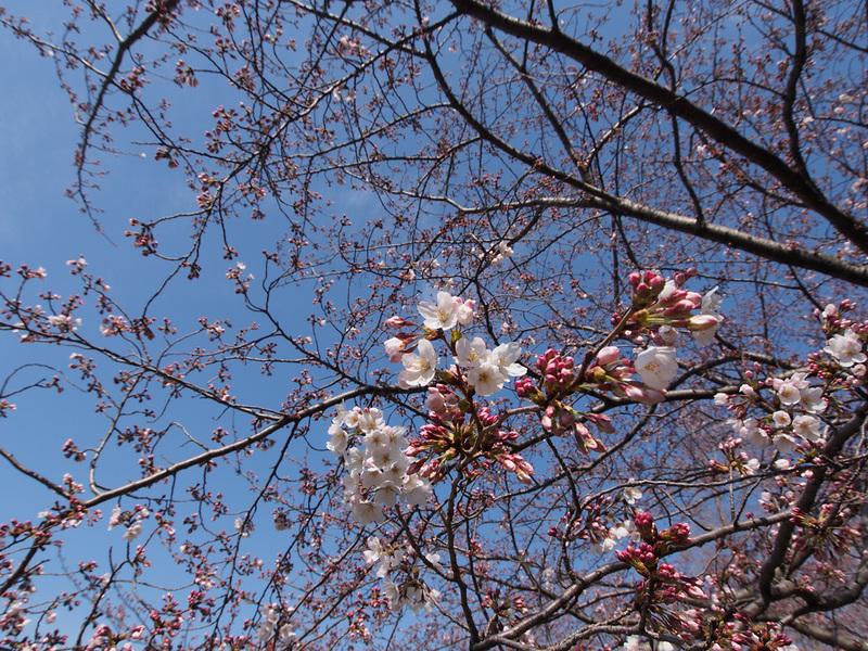 春といえば・・・_b0021375_2211739.jpg