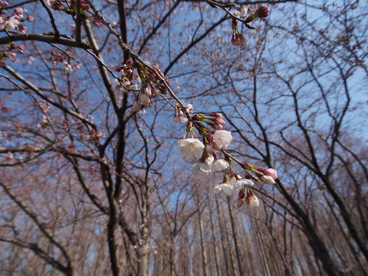 春といえば・・・_b0021375_2212651.jpg