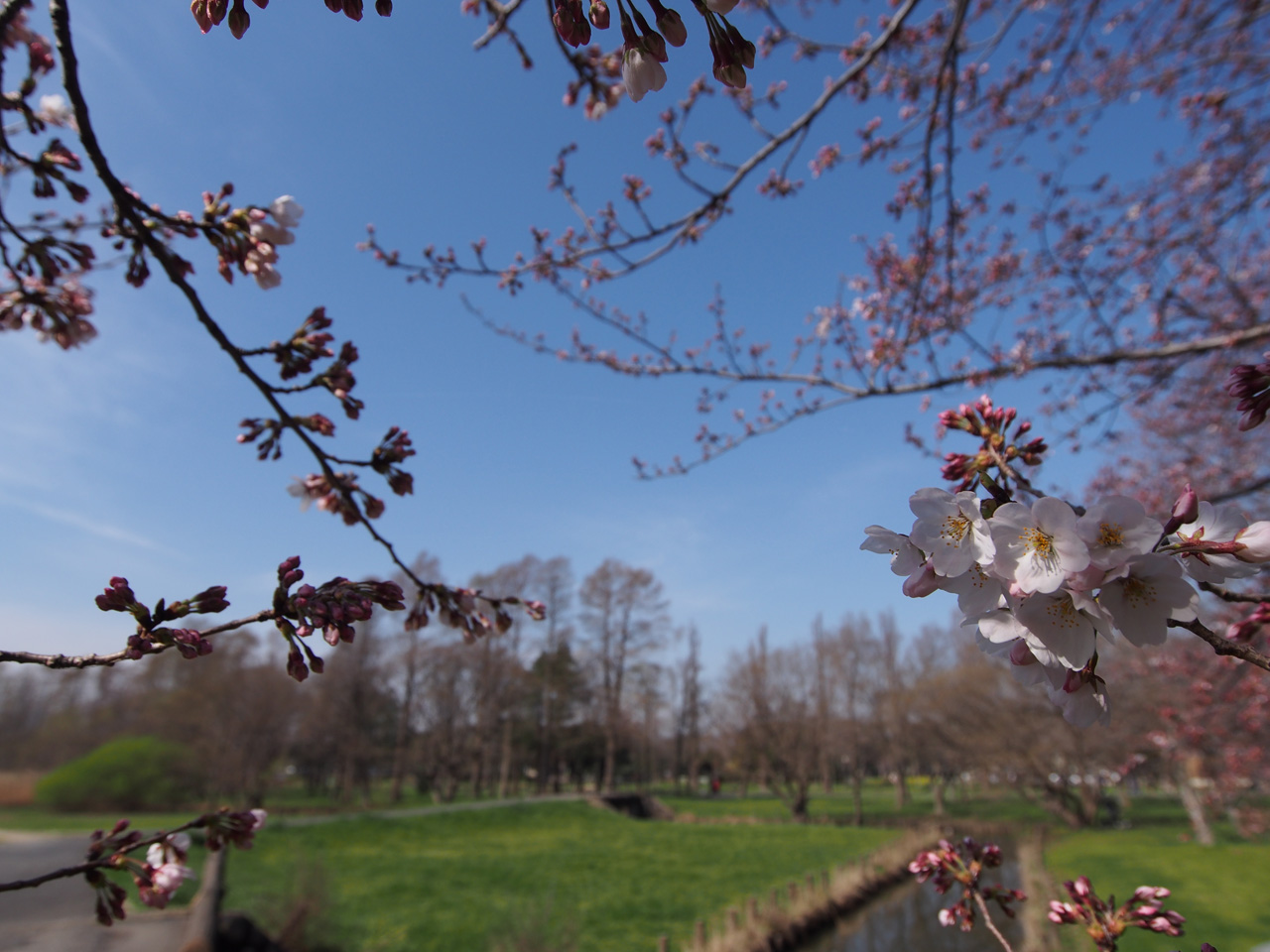 春といえば・・・_b0021375_2213415.jpg