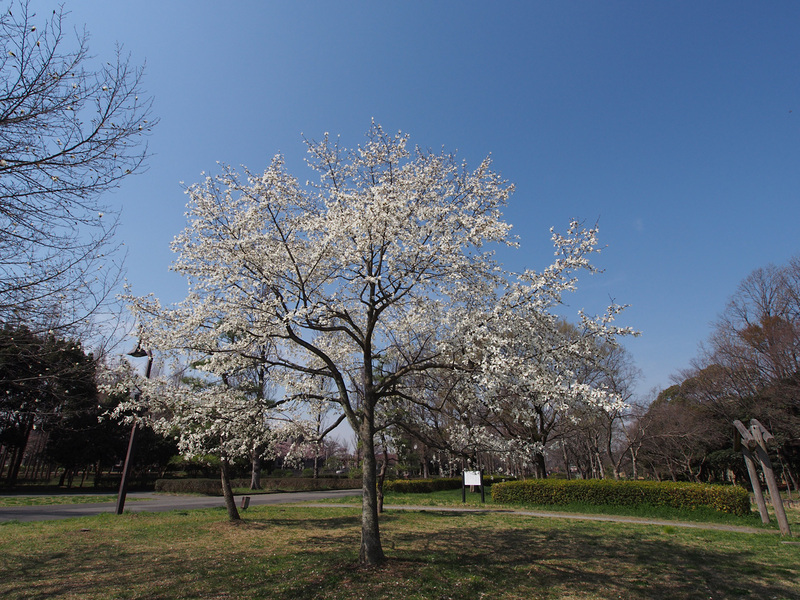 春といえば・・・_b0021375_2214335.jpg