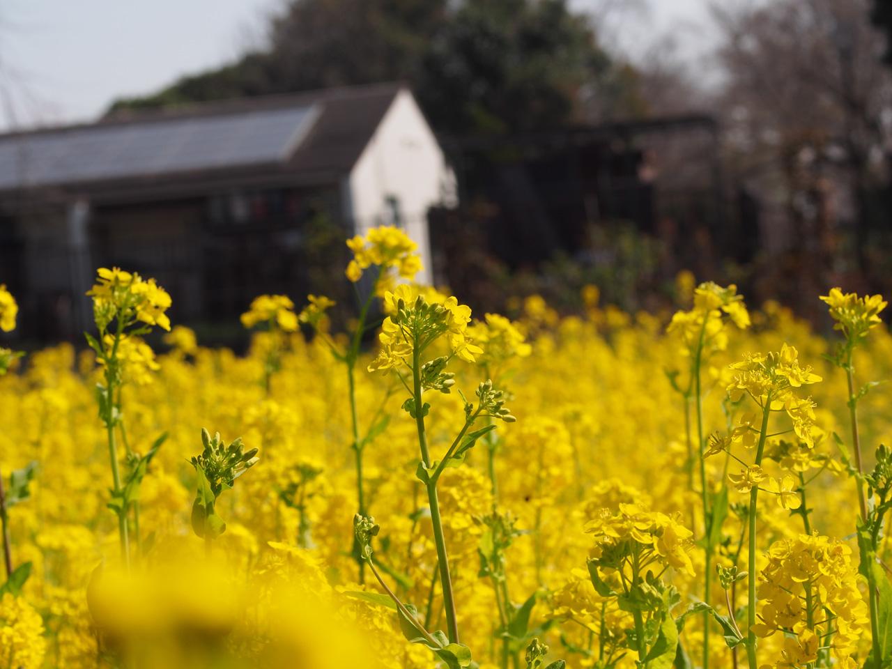 春といえば・・・_b0021375_2222715.jpg