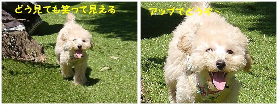 大祐のランデビューは土曜日のワン・LOVEさんで\(>∀<)/_b0175688_23092274.jpg