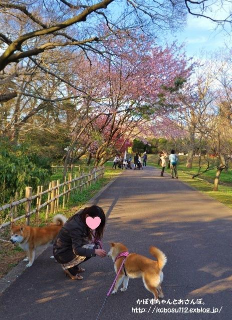 春休み初日の嬉しかったこと_a0126590_22163053.jpg