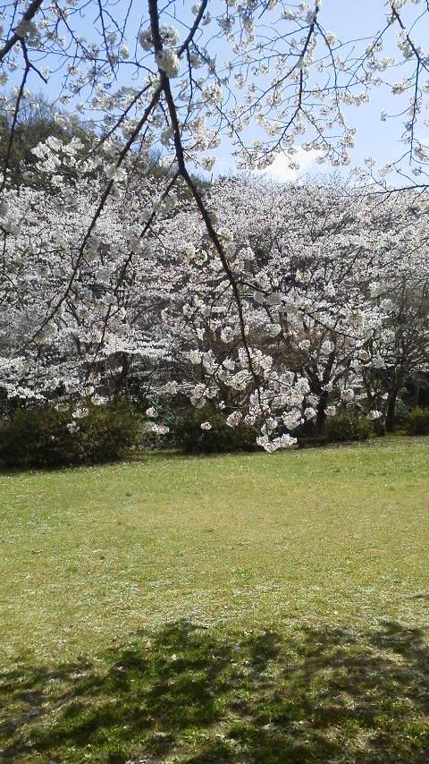 春しなむ  27.03.29 日曜日  晴れ_f0201790_17312117.jpg