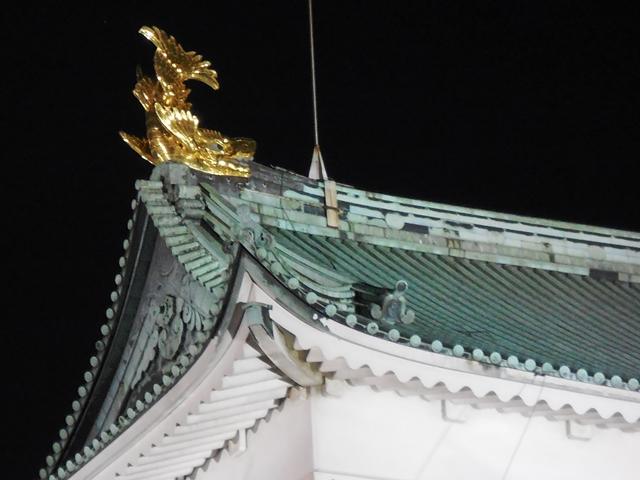 名城公園夜桜_d0251191_1434513.jpg
