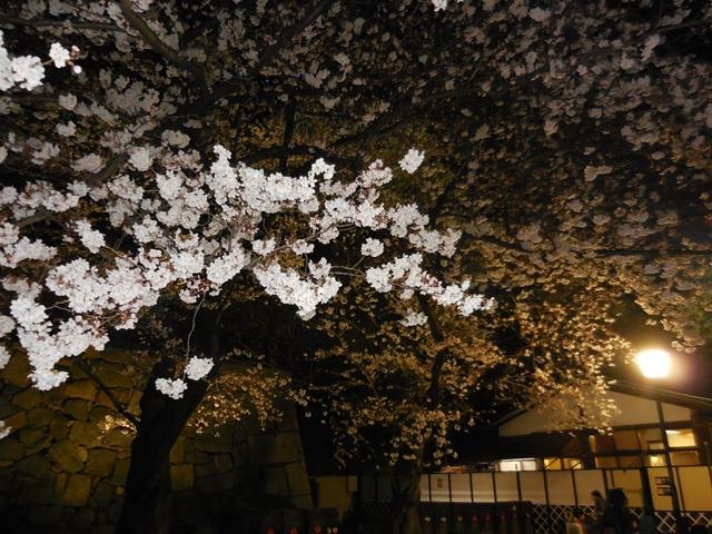 名城公園夜桜_d0251191_1435910.jpg