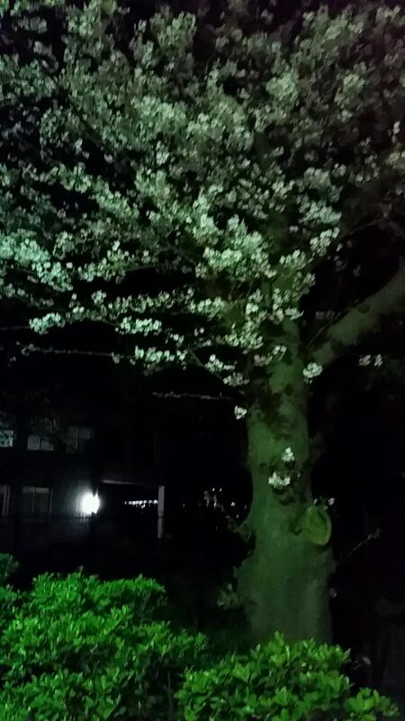 ♡♡♡♡♡さくら ♡桜 ♡櫻♡♡♡♡♡_d0092901_21342073.jpg