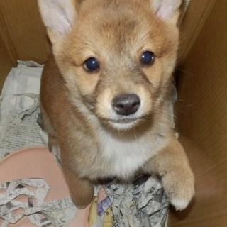 子犬だらけの里親会_f0242002_22112041.jpg