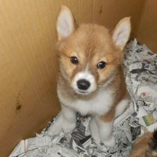 子犬だらけの里親会_f0242002_22185929.jpg