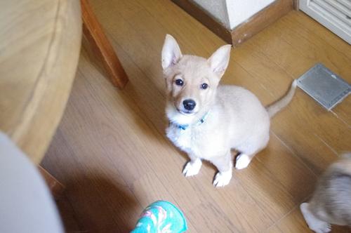 子犬だらけの里親会_f0242002_22201866.jpg