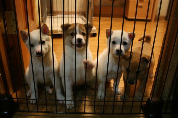 子犬だらけの里親会_f0242002_22221672.jpg