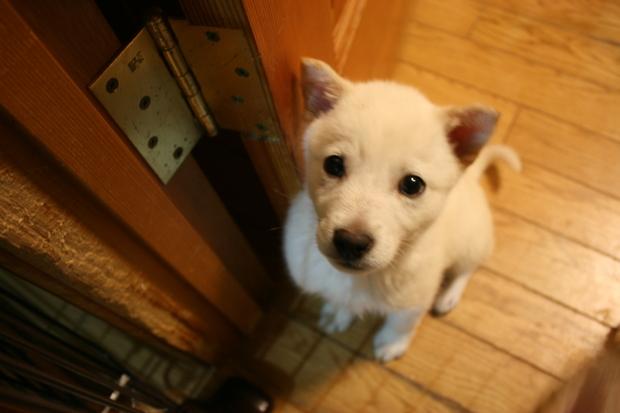 子犬だらけの里親会_f0242002_22281252.jpg