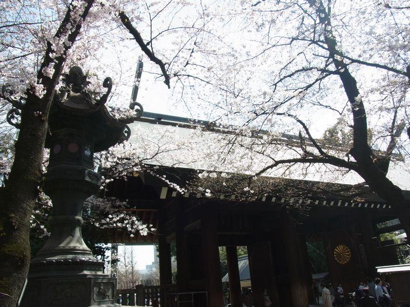 靖国の桜_a0246407_6161440.jpg