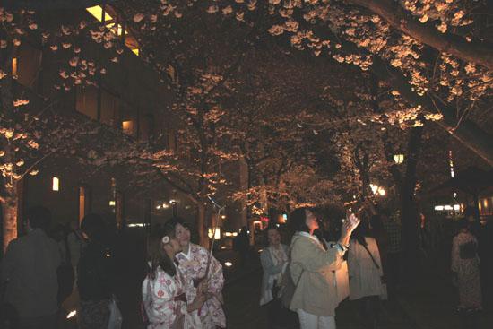 祇園白川夜桜 2015桜たより9_e0048413_2134188.jpg